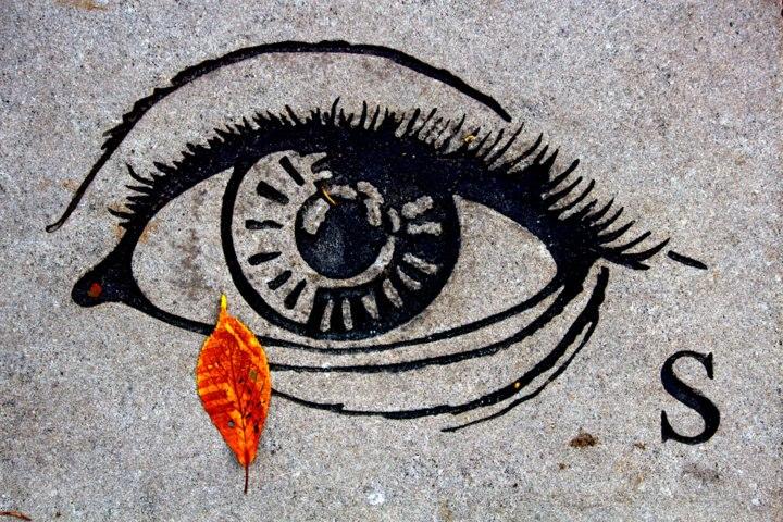 Fall Eye © David L. Harkins